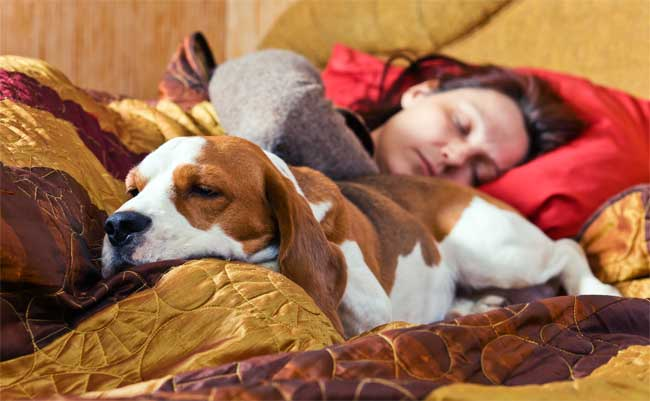 Keeping Your Pets in Mind When Shopping for Furniture